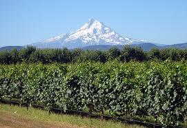 Gorge Wine Mt Hood