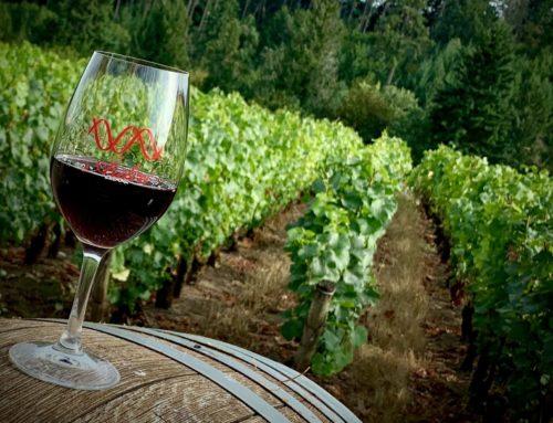 Oregon Wine Tasting Tour
