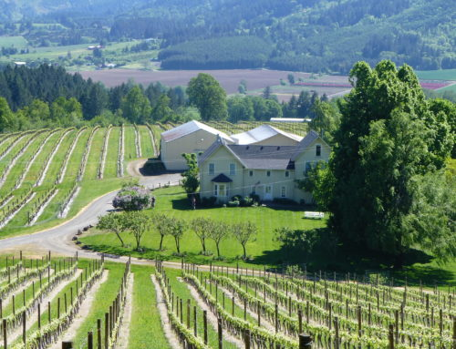 Oregon Wine Tasting Tour & Portland Spirit Dinner Cruise
