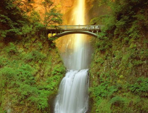 Society of American Foresters- Multnomah Falls & Gorge Waterfalls Tour
