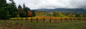 Oregon-Fall-Colors-Vineyards-300x104