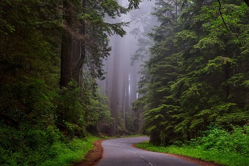 RedwoodNationalPark2-freepublicdomainPixabay